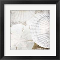 White Shells II Framed Print
