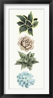 Row of Succulents I Framed Print