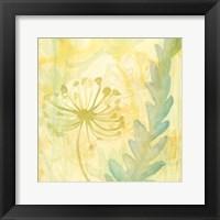 Florid Garden II Framed Print