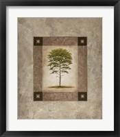 European Pine II Framed Print