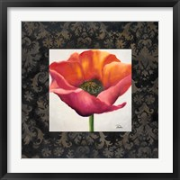 Poppy Flower I Framed Print