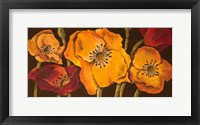 Framed Dazzling Poppies II (black background)