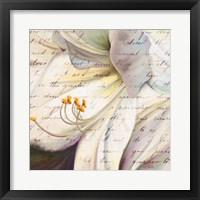 Lily Script I Framed Print