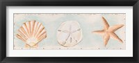 Sandy Shells I Framed Print