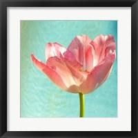 Framed Pink Tulip
