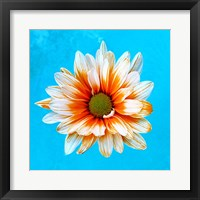 Framed Peach Daisy
