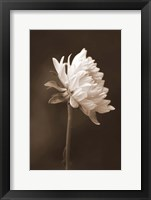 Framed Sepia Flower I
