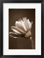 Framed Sepia Flower II