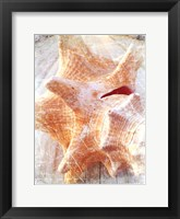 Framed Conch I