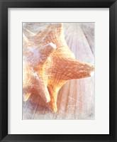 Framed Conch II