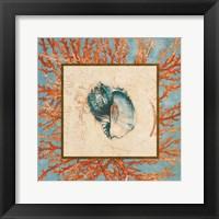 Framed Coral Medley Shell II