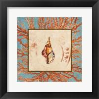 Framed Coral Medley Shell IV