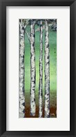 Tall Trees II Framed Print