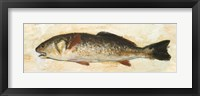 Catch of the Day II Framed Print