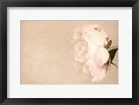 Framed Alluring Flower