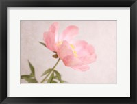 Framed Soft Petals