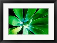 Framed Green Intrigue