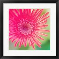 Pink Fun I Framed Print