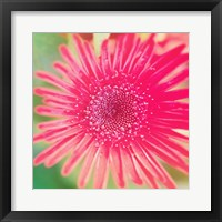 Pink Fun II Framed Print