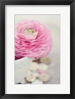 Softy Elegant II Framed Print