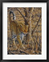 Framed Leopard Walking
