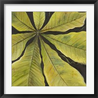 Evergreen II Framed Print