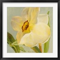 Framed Daffodil Sky II