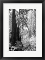 Tree Path II Framed Print
