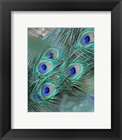 Enchanted Feather II Framed Print