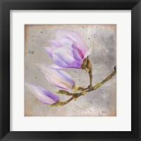 Magnolia on Silver Leaf I Framed Print