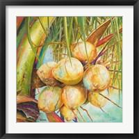 Patricia's Coconuts I Framed Print