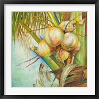 Patricia's Coconuts II Framed Print