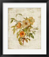 Roses on Newsprint I Framed Print