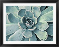 Framed Teal Succulent