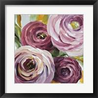 Framed Ranunculus Rosa II