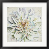 White Dahlias II Framed Print