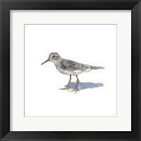 Sandpiper on White II Framed Print