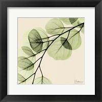 Framed Mint Eucalyptus 1