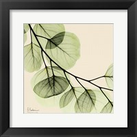 Framed Mint Eucalyptus 2