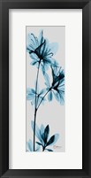 Framed Blue Azalea