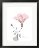 Framed Hibiscus B49 Pink