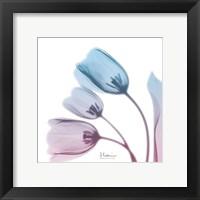 Framed Soft Tulips Rose Serenity