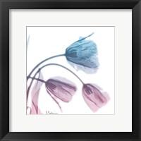 Framed Tulips Rose Serenity