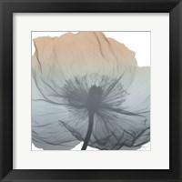 Framed Poppy Earthy Beauty
