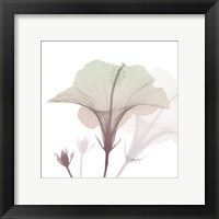 Framed Neapolitan Hibiscus