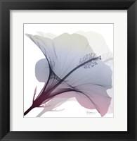Framed Tasty Grape Hibiscus 2