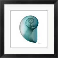Framed Teal Water Snail 2
