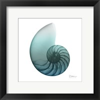 Framed Water Snail 4