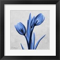 Framed Midnight Tulips