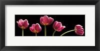 Framed Five Tulips